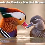 FengShui Mandarin Ducks for Marital Harmony - AlternateHealing.net
