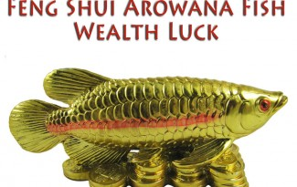 FengShui Arowana Fish for Wealth Luck - AlternateHealing.net
